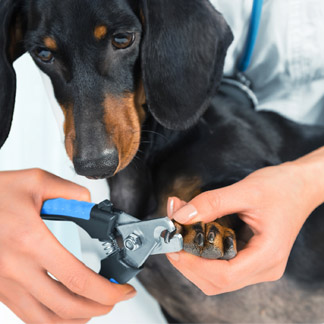 &lt;p&gt;You don&amp;rsquo;t have to choose between having an exquisite hardwood floor and having a pet. Make sure pet nails are properly groomed and maintained. Use caution and care when trimming pet claws because improper techniques can harm your pets. Other alternatives include pet booties and nail caps.&lt;/p&gt;<br/>